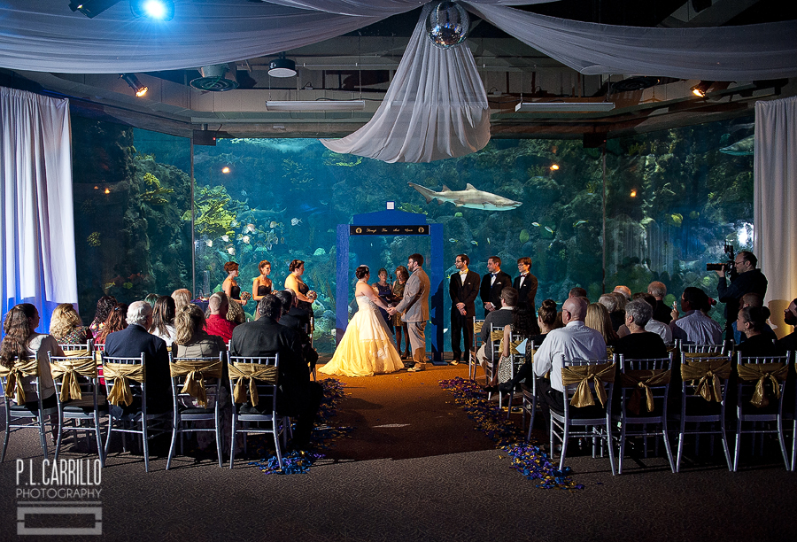 Florida Beach Wedding With Aquarium Reception: Pictures, Posters, News And Videos On Your