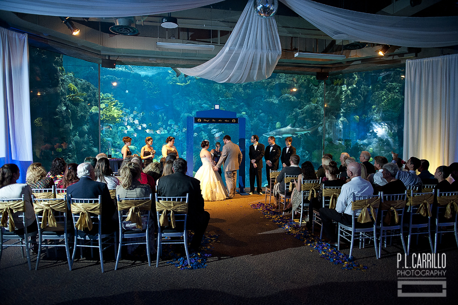 A Florida Aquarium Wedding 003 004 005 006
